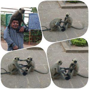 Naughty Monkey, Udayagiri